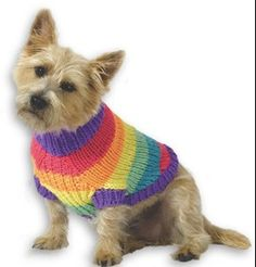 Follow this free knit pattern to create a rainbow dog sweater using Caron Simply Soft Brites worsted weight yarn.