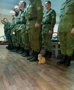 Military cat - your daily dose of funny cats - cute kittens - pet memes - pets in clothes - kitty breeds - sweet animal pictures - perfect photos for cat moms Funny Animal Jokes, Funny Animal Videos, Funny Animal Pictures, Cute Funny Animals, Animal Memes, Funny Videos, Funny Photos, Cute Kittens, Cats And Kittens