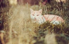 Gato de campo | Flickr - Photo Sharing!