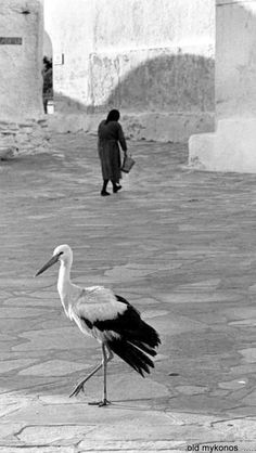 Find out Patrix Mykonos Island Greece, Athens Greece, Old Time Photos, Old Pictures, Greece Photography, Street Photography, Rare Photos, Vintage Photos, Greece History