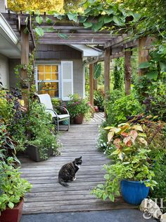Poor drainage doesn't have to mean the end of having a gorgeous landscape. As this homeowner found out, proper drainage clears the way for a dry home and thriving garden. Small Garden Oasis, Eco Garden, Garden Trellis, Dream Garden, Paradise Garden, Pergola, Small Yard Landscaping, Cozy Backyard, Diy Garden Decor