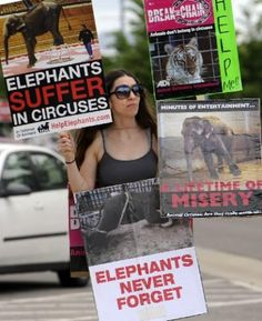 El Jebel Shrine #Circus draws handful of animal rights protesters in #Broomfield - Boulder Daily Camera