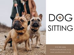 Facebook Post Template Pet Sitting, French Bulldog, Templates, Facebook, Pets, Animals, Models, Animals And Pets, Animales