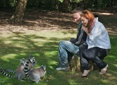 Warden Experiences at Fota Wildlife Park, Co Cork. Spend time experiencing life as a warden or get up close with some amazing animals at Fota Wildlife Park. Most Endangered Animals, Stuff To Do, Things To Do, Wildlife Park, Park Homes, Large Animals, The Visitors, Bird Species, Lemurs