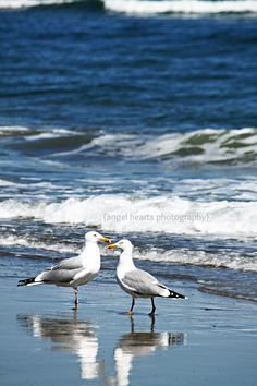 {angel hearts photography} SeaGulls