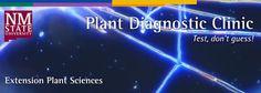 NMSU Plant Clinic: The NMSU Plant Diagnostic Clinic Goes Social