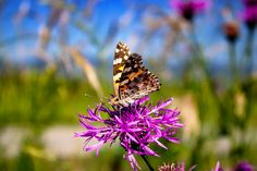 Makrofotografie Moth, Insects, Plants, Animals, Gardens, Tools, Searching, Bricolage, Macro Photography