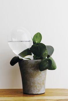I might actually keep plants alive // samuji koti watering bulb Ikebana, Indoor Garden, Indoor Plants, Diy Plante, Plantation, Green Plants, Houseplants, Planting Flowers, Greenery