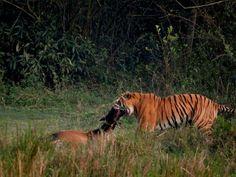 Kaziranga National Park. Assam . Explore with us.