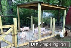 How To Build  A Simple Pig Pen - build this in just 3 days... #pigs #homesteading