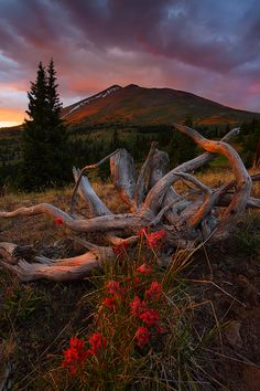 se7enshades:    Location: White River National Forest, Colorado, United States. Photograph by Nate Zeman.