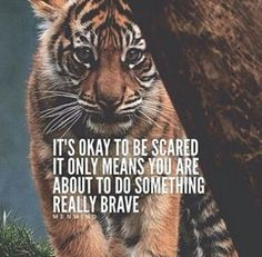 It's okay to be scared. It only means you are about to do something really brave life quotes quotes quote life inspirational quotes fear courage quotes quotes and sayings life pic life pics Inspirational Quotes About Success, Meaningful Quotes, Success Quotes, Great Quotes, Positive Quotes, Motivational Quotes, Tiger Quotes, Lion Quotes, Animal Quotes