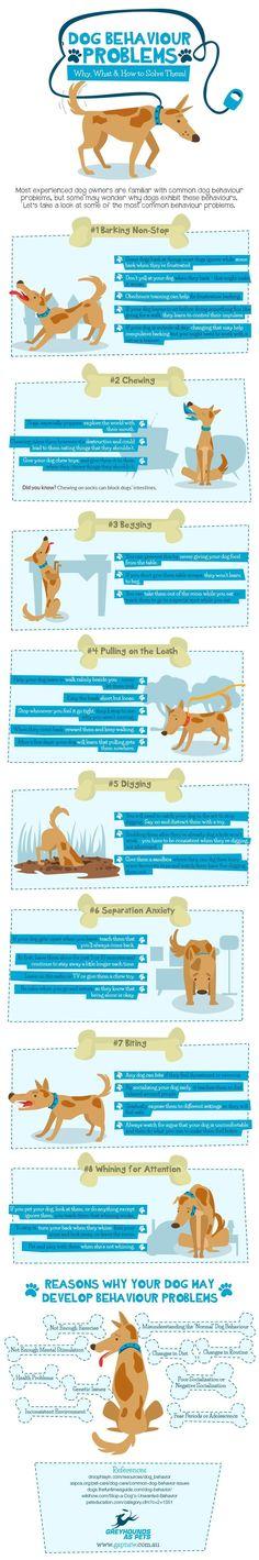 Pupy Training Treats - For more info, visit www.gapnsw.com.au - How to train a puppy?