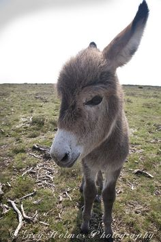 A BIT TOO CLOSE DONKEY by Snaps379, via Flickr
