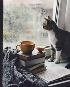 Books, tea and cats on rainy days Cozy Aesthetic, Autumn Aesthetic, Rainy Day Photography, Book Photography, Crazy Cat Lady, Crazy Cats, Animals And Pets, Cute Animals, Foto Still
