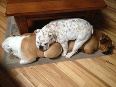 ❤ Is the rug too small or is it just warmer and more padded on top? ❤ Posted on Baggy Bulldogs