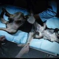 PLEASE SIGN!  L'Oreal: Stop testing on animals or using any animal products! Go cruelty free!
