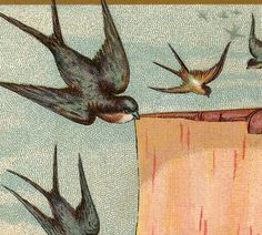 Victorian Trade Cards Swallows