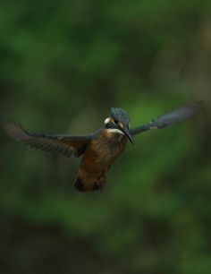 Kingfisher I.. nice shot