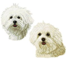Maltese twins - cross stitch pattern designed by Marv Schier. Category: Dogs.
