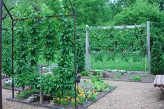 "Gorgeous trellising and espalier.  I wish I had the discipline to do this.  ""Peter Thevenot's Garden"""