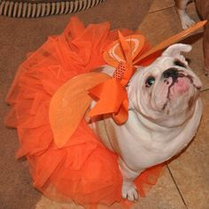 ❤ All dressed up and ready to dance (for a treat of course) ❤