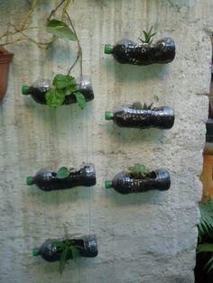 Version casera de muro verde, facil de realizar
