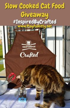 Hill's Ideal Balance Crafted has a slow cooked cat food that might be perfect for your cat! Keep reading to learn more and enter to win a $300 gift card to PetSmart! #InspiredByCrafted #sponsored