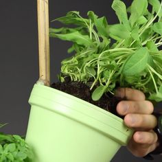 Herb garden for your kitchen! - DIY Basteln & Selbermachen - How to build a vertical herb garden that doesn& take up much space. Fenced Vegetable Garden, Herb Garden, Indoor Garden, Indoor Plants, Outdoor Gardens, Garden Planters, Kitchen Herbs, Herbal Kitchen, Culture D'herbes