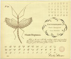 No.20 from Insects and alphabets