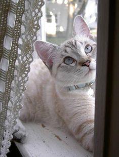 Sofie [3] kitten