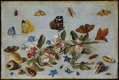 The Athenaeum - Butterflies and other insects (Jan van Kessel the Elder - )