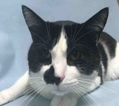 *** TO BE DESTROYED 06/07/17 *** SPECKY is not happy that his owner dumped him for no time.  He needs a new home asap where he can decompress.