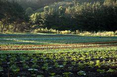 Green Gulch Farm Zen Center Muir Beach California
