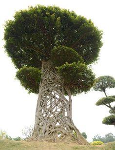 The 'Spider's Web' tree trunk in a park in Nanning, Guangxi, China ( anning, Guangxi, Çin bir parkta bir 'Örümcek Ağı' ağacının düğümlü dalları (veya boğazlayıcısı incir) Resim: Top Fotoğraf Corporation'ın / REX)
