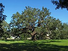 Trees to plant in texas garden expert website garden live oak the last 13 years we lived in west texas odessa we sciox Choice Image