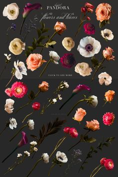 Lovely roses, anemones, strawflowers, ranunculus, and others were photographed to create this beautiful clip art set that really is magical. Rose Design, Dark Backgrounds, Paper Background, Overlays, Anemones, Ranunculus, How To Draw Hands, Pandora, Clip Art