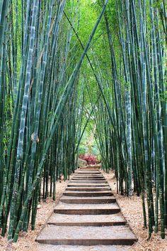 Bamboo Walk, Crystal Castle, Byron Bay, New South Wales, Australia