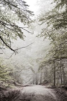 snowy path + trees