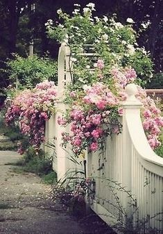"""Pretty pink climbing roses on white fence - something about a beautiful entrance to a garden brings me to my childhood love """"The Secret Garden"""". Beautiful Gardens, Beautiful Flowers, Beautiful Beautiful, The Secret Garden, Rose Arbor, White Fence, White Picket Fences, White Garden Fence, Picket Fence Garden"""