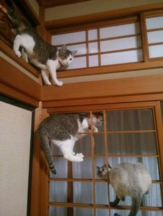 Cats rule this house. Funny Cute Cats, Cute Cats And Kittens, I Love Cats, Baby Animals, Funny Animals, Animals And Pets, Cute Animals, Stupid Cat, Ninja Cats