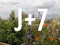 Celui qui cultive son potager sur le toit un restaurant gastronomique tenu par le chef Yannick Alleno. fruits et légumes sont cultivés sur le toit de la maison de la Mutualité.  Le terroir parisien, 20 rue Saint-Victor, 75005 Tous les jours de midi à 14h30 et de 19h à 22h30.