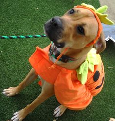 97 Best Dogs in Costumes! images in 2019 | Dogs, Dog
