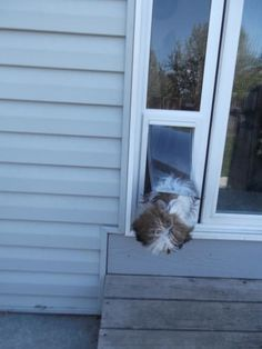 doggie door addition