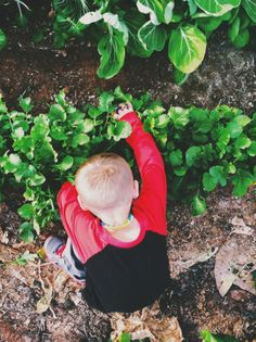 Radish harvest at Agritopia Community Garden