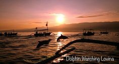 Bali Dolphin Watching Tour is an exciting tour package to watch dolphins in Lovina and do Singaraja Tour to visit several places in north Bali Bali Tour Packages, Bali Travel Guide, Travel 2017, Small Group Tours, Majestic Animals, Tourist Places, Dolphins, Travel Photos, Cool Photos