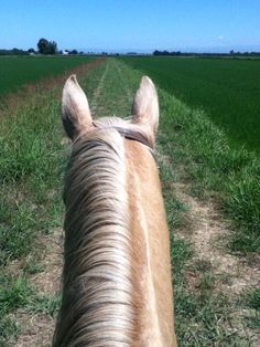 Horse back riding | western | my photography