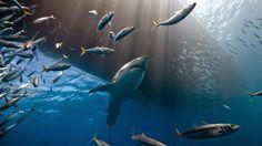 Un Mundo en Paz: Lo mejor del concurso National Geographic 2014