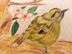 Gold crest in coloured pencil.