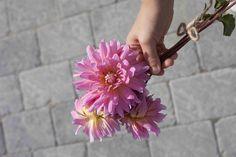 blomst, relieff, gråmix